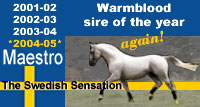 maestro-warmblood-of-the-year